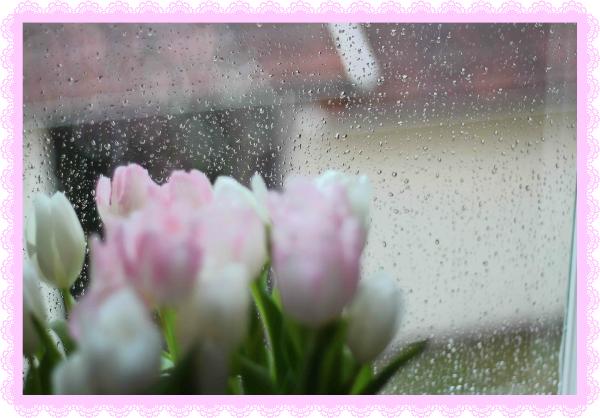 tulips-rain